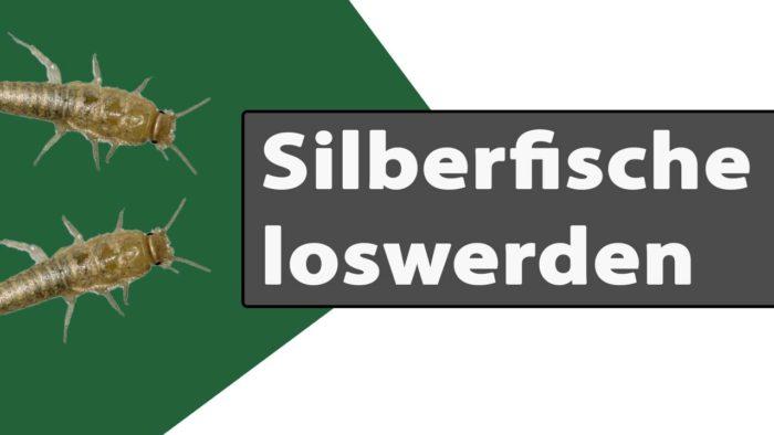 silberfische loswerden
